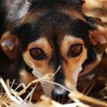 Dlaczego kosze na psie odchody są potrzebne?