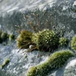 Kamienie ogrodowe – w jaki sposób je wykorzystać?